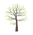 Trees with leaves vector