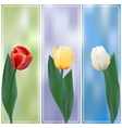 Three tulips banner vector image