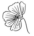 Flower doodle drawn in outline for coloring vector image