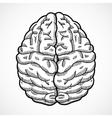 Human brain sketch vector image