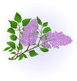 Twig lilac with flowers and leaves vintage vector image