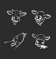 group of a cow head on black background farm vector image vector image