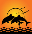 dolphin silhouettes on sunset background vector image