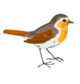 Robin bird vector image
