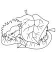 Black And White Cartoon Hedgehog vector image