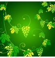 Grape vines green background vector image