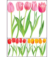 Beautiful tulips in different color vector image vector image