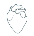 human heart anatomy isolated icon design vector image