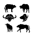 Buffalo set vector image