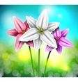 Natural background with lilies vector image vector image