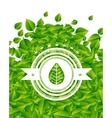 Spring summer green leaves nature background vector image vector image