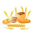 whole wheat bread vector image
