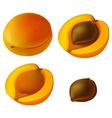 Apricot elements vector image