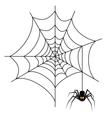 Halloween spider on web vector image