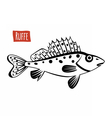 Ruffe black and white vector image