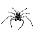 spider 3 vector image