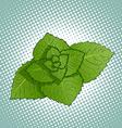 Mint leaves Medicinal plant vector image