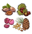 Collection of walnuts chestnuts pine nuts and vector image