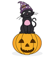 cat sitting on a pumpkin vector image vector image