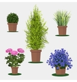 flowers in pot vector image