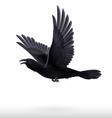 Black raven on white background vector image