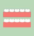 healthy teeth on gum for dental care vector image