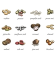 nuts icons vector image