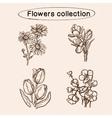 Flowers sketch elements vector image