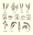 set of different cereals muesli wheat vector image