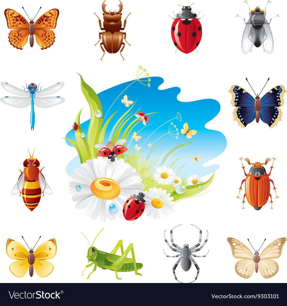 Insect and summer nature icon set with vector
