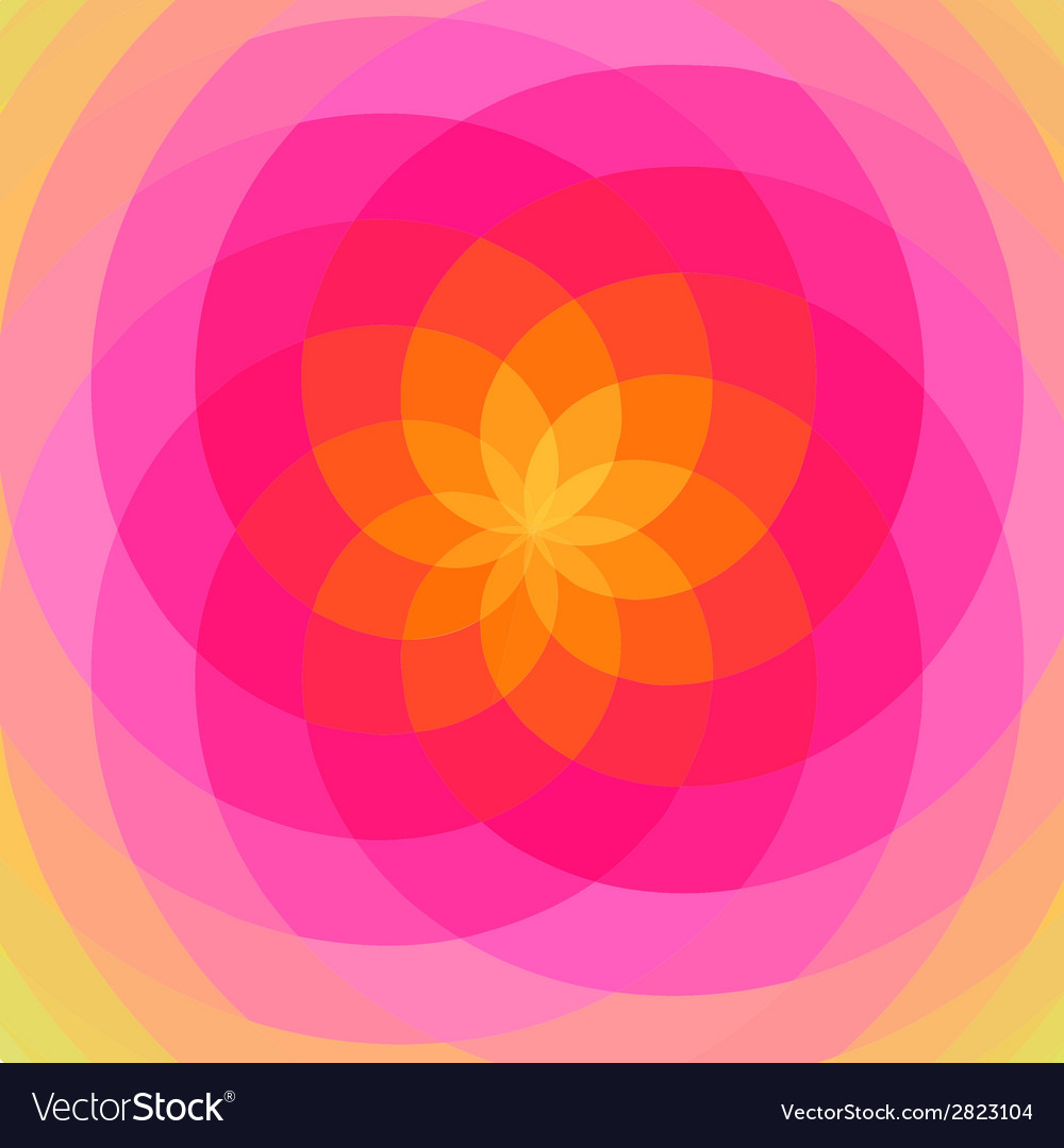 Floral spiral abstract vector