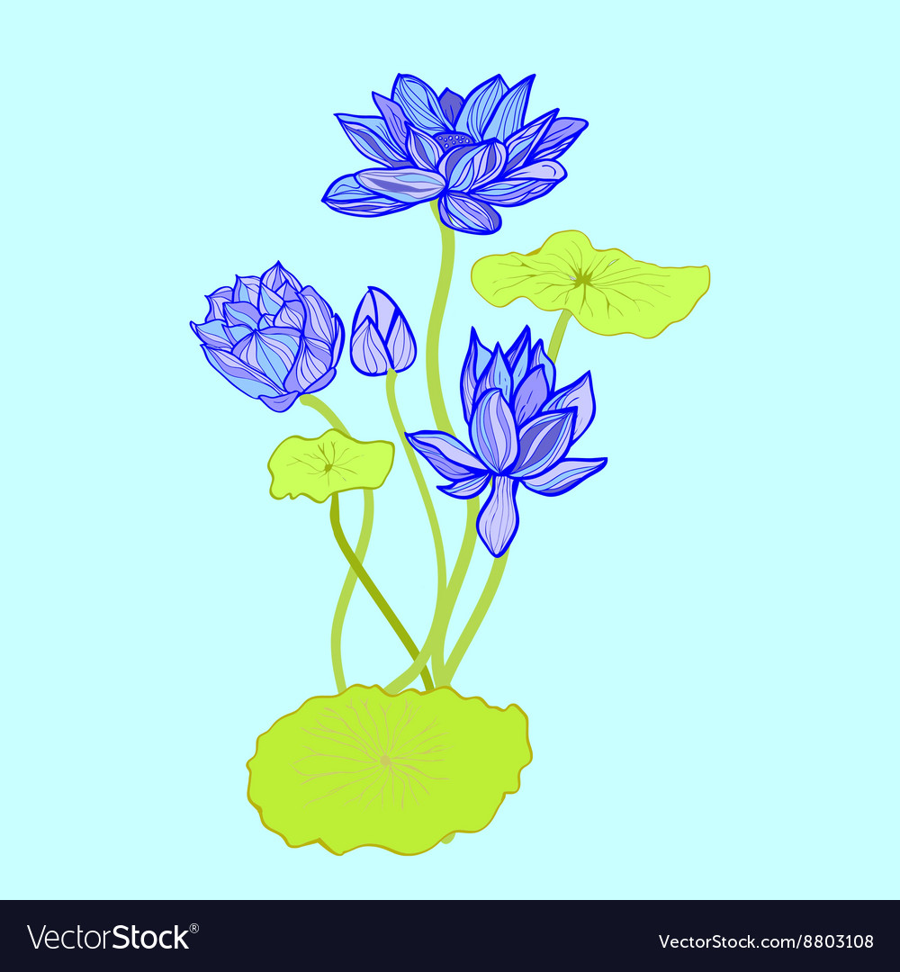 Background of beautiful hand drawn lotus flowers a vector