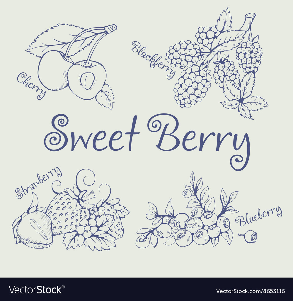 Set of blackberry strawberry blueberry cherry vector