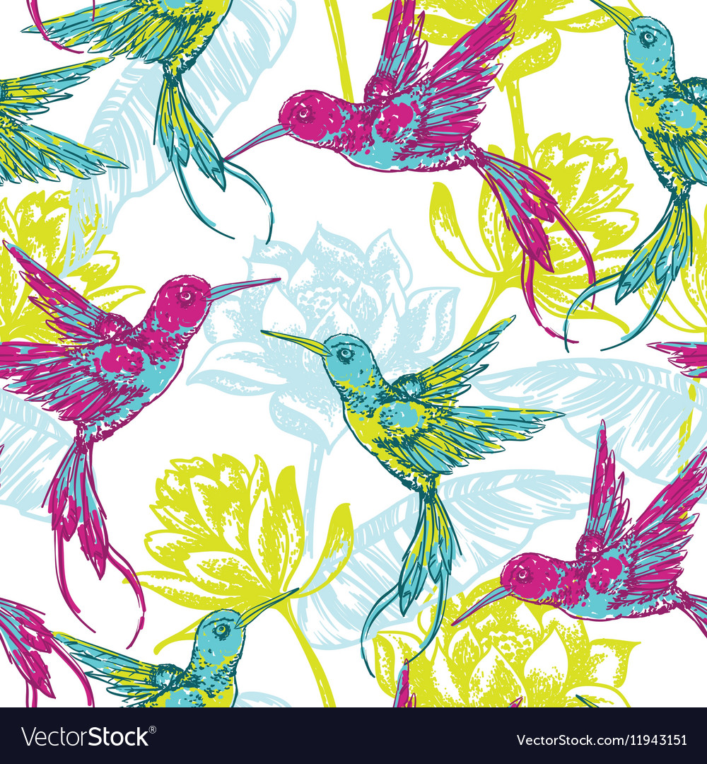 Hand draw tropical background with colibri bird vector