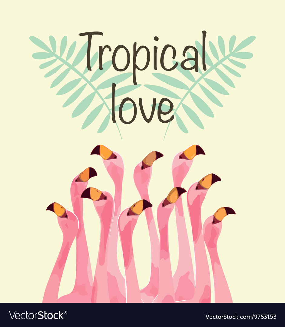 Flamingo for tropical love vector