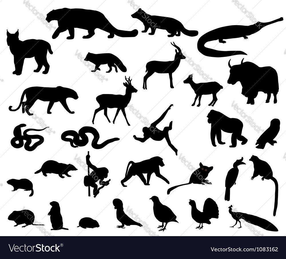 Animals of asia vector