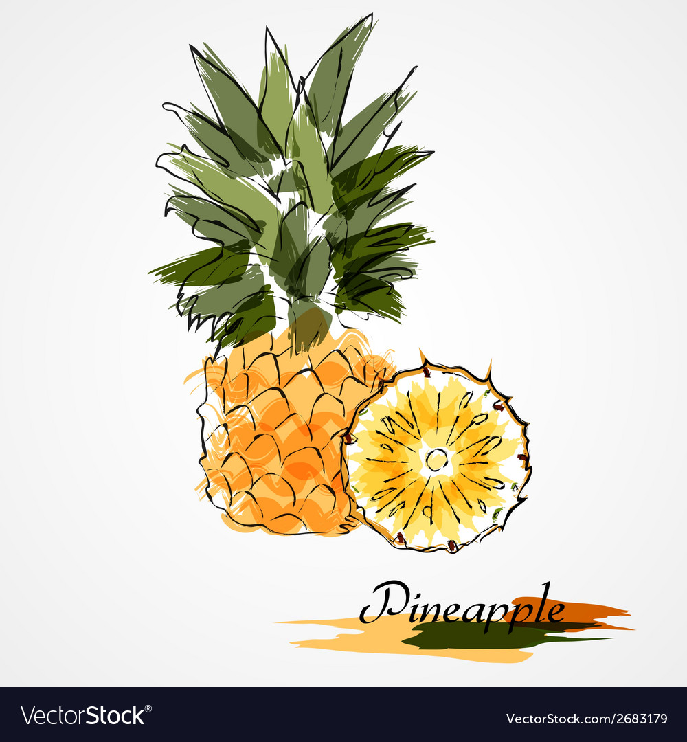 Pineapple fruit slice vector