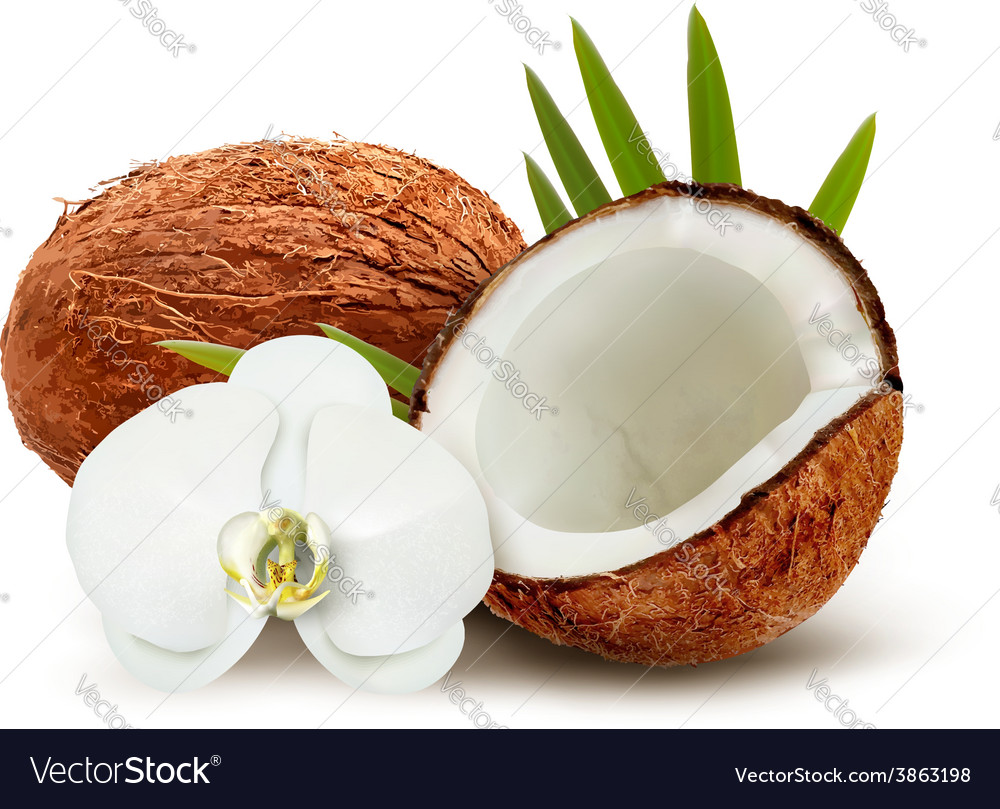 Coconut with leaves and white flower vector