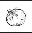 hand drawn sketch tomato vector image