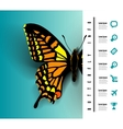 Realistic butterfly top view vector image vector image