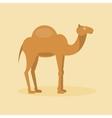 Arabian camel vector image