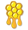 Bees honeycomb full of honey vector image