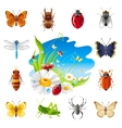 Insect and summer nature icon set with vector image
