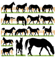 Set of 16 Horses Silhouettes vector image