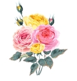 Branch of roses vector image