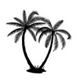 a palm tree silhouettes vector image