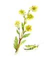 Hand drawn herbal flowers isolated on white vector image