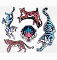 set of wild cat flash tattoo patches or elements vector image