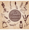 Hand drawn lavander set vector image