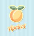 Retro apricot vector image